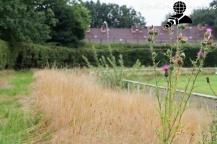 HFC Falke - TBS Pinneberg_03-08-16_08