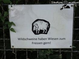 FV Gondelsheim - SV Menzingen_23-09-17_04